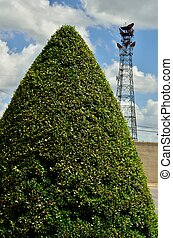 Well manicured bush - A bush precisely maintained in a cone...