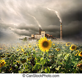 Environmental contamination - Field of sunflowers on a...