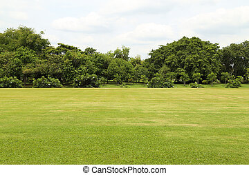 green grass field in big garden