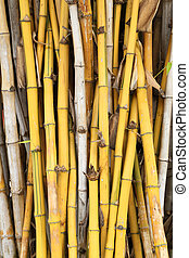 yellow bamboo plant texture background