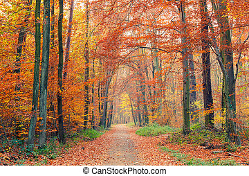 Colorful autumn park - Alley in the colorful autumn park