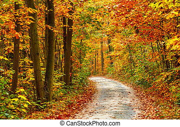 Autumn forest - Pathway in the colorful autumn forest