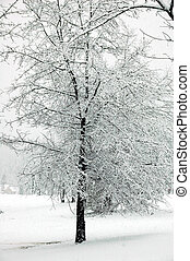snow day - snow storm photographed near atltanta georgia...