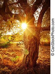 Sun beam through olive tree branch - Bright yellow sun beam...