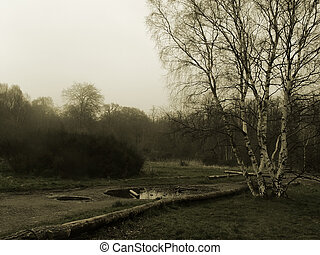 Clumber Park I - A sepia coloured landscape of a misty park...