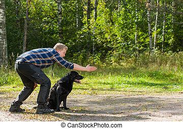 Labrador retriever - Dog owner trains his labrador retriever...
