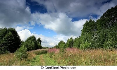 clouds behind in the forest - clouds behind the trees in the...