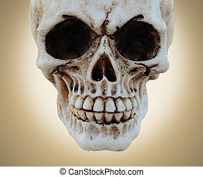 skull and texture - picture of an old skull textured