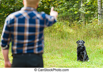 Sit training - Dog owner trains his labrador retriever, dog...