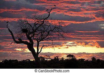 Marabou Storks at sunset - A group of Marabou Storks...