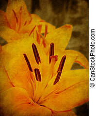 Textured Lily - Grunge texture with a lily. Old postcard,...