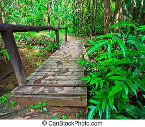 csatorna, Bridzs, Erdő, fából való, keresztül