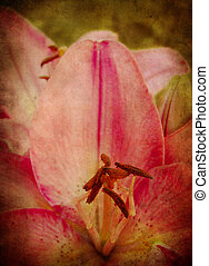 Textured Pink Lily - Grunge texture with a pink lily. Old...