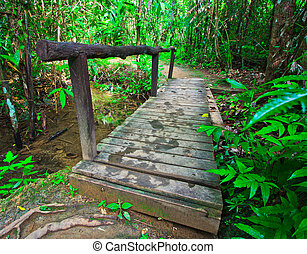 Wooden bridge across the canal in Forest