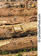 Tree Trunks - Detail of tree trunks
