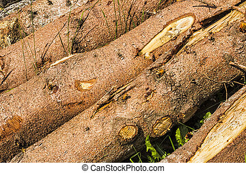Tree Trunks - Detail of tree trunks