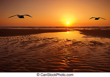 seagulls and sunset - beautiful landscape with seagulls and...