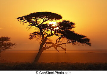African Sunrise - Sunrise in Etosha National Park - Namibia