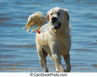 dog is getting a drink