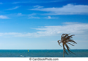 palmtree landscape - lonely palmtree against the ocean