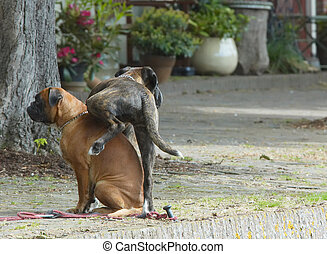 humorous dogs - funny scene of two dogs