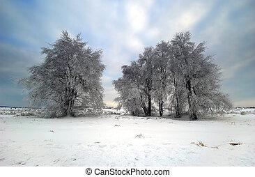 winter landscape - beautiful winter landscape