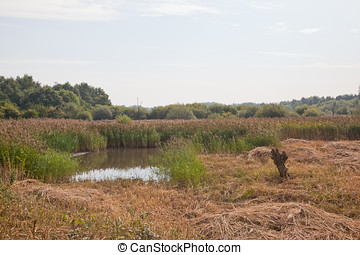 Nature Reserve - Photo of a nature reserve in Doncaster,...