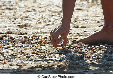 seashells - searching for seashells on the beach