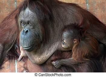 mother and baby - Mother and her baby monkey