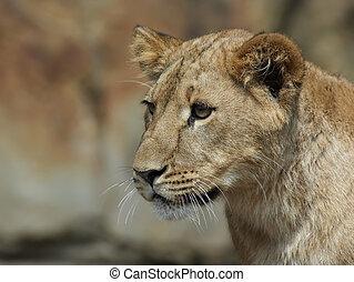 Lion - Cute lion cup