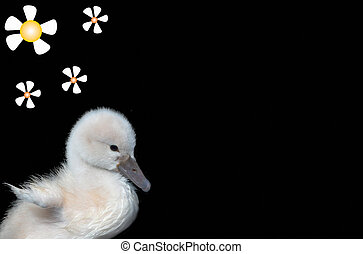 baby swan with flowers and room to write