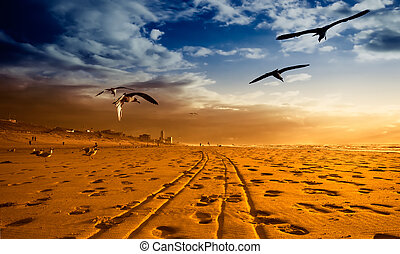 A beach in gold - Seagulls on the beach during sunset