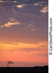 Kalahari sunrise - Sun rises over a lone tree in the...