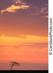 Kalahari sunrise - Sun rises over another day in the...