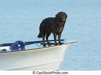 Water dog - A dog on the front of a boat