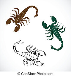 Vector image of an scorpion on white background