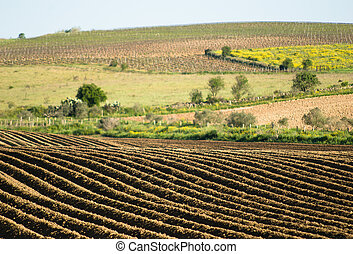plowed field - landscape of plowed field outdoor in Sardinia