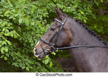 Beautiful horse - A beautiful horse during a competition