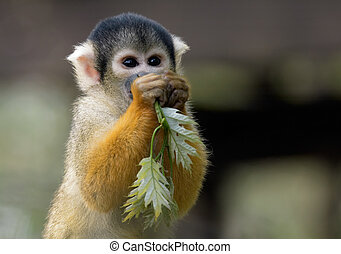 This is mine - squirrel monkey with some leaves