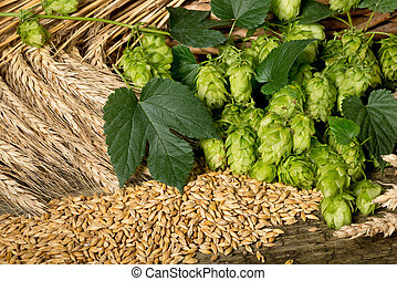 raw material for beer production - still life with hop cones...