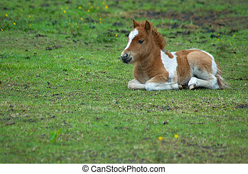 Cute horse in the grass - A baby horse in the grass