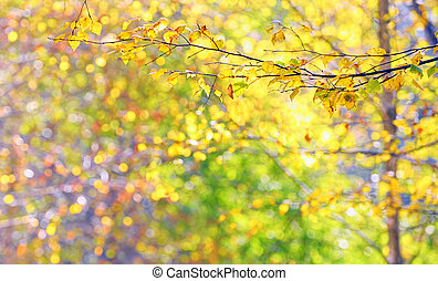 Autumn leaves in brunches