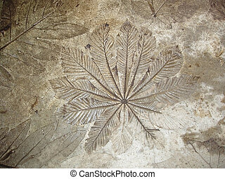Palm fronds embedded in concrete - Large tropical Palm...