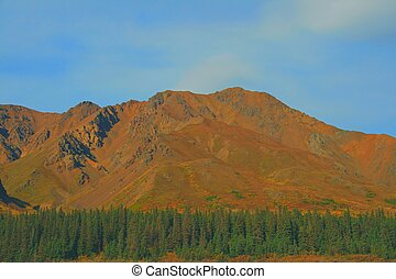 Mountain Treeline - Treeline in front of mountain in Alaska.