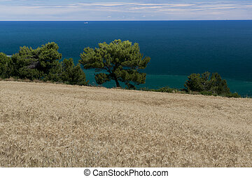 Cornfield over Portonovo Bay - Cornfields and panorama over...