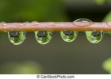 oak leaves catched in waterdrops after rainfall