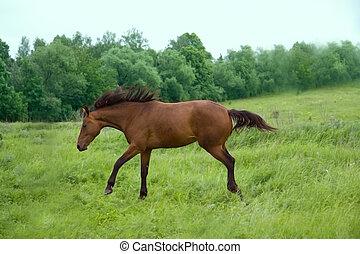 Running Horse - brown  horse running on a green field