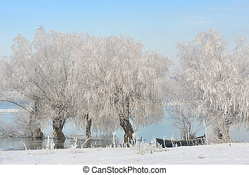 winter trees covered with frost - Frosty winter trees near...