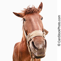 Funny closeup of a horse - wide angle - Brown horse isolated...