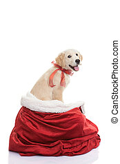 pet gift for christmas holiday - pet dog gift for christmas...